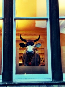 Cow in Window