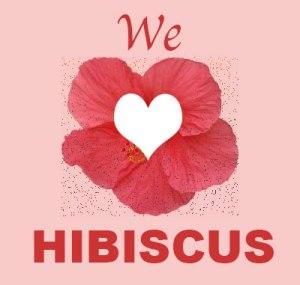 hibiscus mama tea